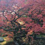 Seattle Japane Garden